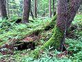 Kleiner Urwald, Natura 2000 Gebiet 8136-302 Taubenberg, Bayern.jpg
