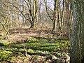 Knueppeldamm Grabenquelle 2010-04-07 018.jpg