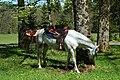 Konji Grad Sneznik.jpg