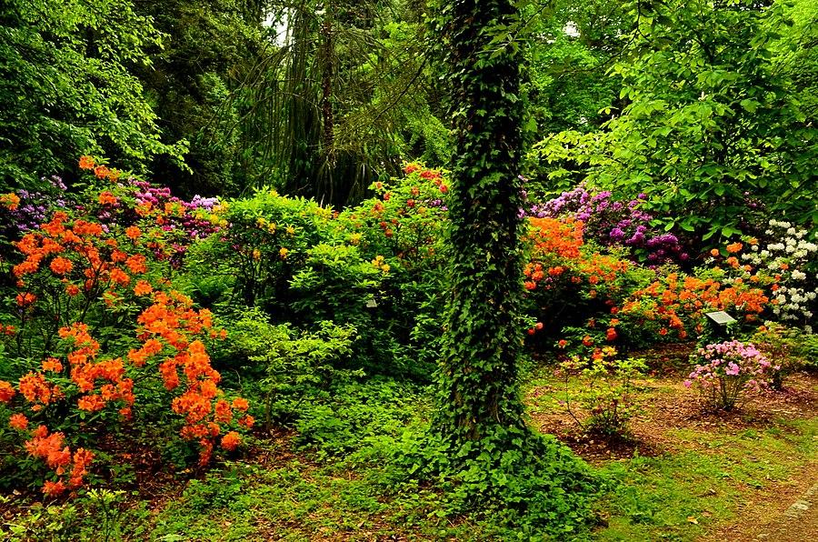 Kórnik Arboretum