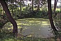 Kritene Skaistkalnē - panoramio.jpg