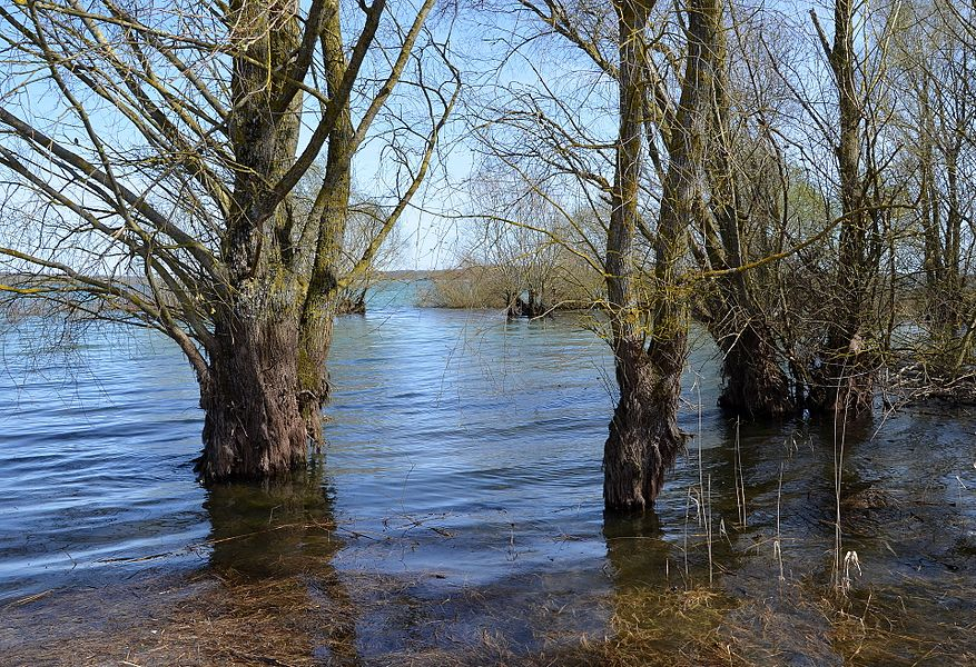 High waters in the Lake Der-Chantecoq, Champagne, France