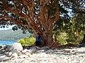Lago Futalaufquen - panoramio.jpg