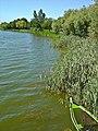 Lagoa de Mira - Portugal (3209532010).jpg