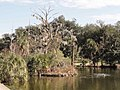 Lagoon at City Park New Orleans.jpg