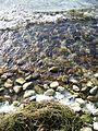 Lake Simcoe Retreat - Maryholme - Dec'10 (86) (5254864869).jpg