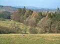 Lambdoughty Glen - geograph.org.uk - 375328.jpg