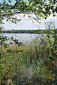 Landschaftsschutzgebiet L 41a Mecklenburger Großseenland - Bolter Kanal (5).jpg