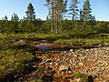 Lapland - Urho Kekkonen National Park - 20180728170924.jpg