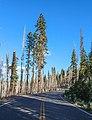 Lassen Volcanic National Park (32167603-547a-4add-99f0-571208f1d1af).jpg