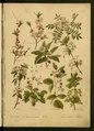 """Leclerc Du Sablon, Mathieu (1859-1944), """" Nos fleurs, plantes utiles et nuisibles """""""".pdf"""