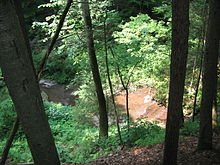 View down a steep slope to a small stream flowing over reddish rocks. There are several trees and bushes and the dappled sunlight covers the scene