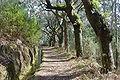 Levada da Serra do Faial (Madeira).JPG