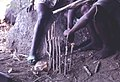 Limba hunters trap south of Kamabai, Sierra Leone (West Africa) (1694996394).jpg