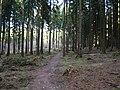 Limes-Path near Hollerkopf.jpg