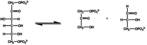 Chemical specificity - Figure 1