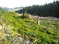 Loch Ard Forest - geograph.org.uk - 1056260.jpg