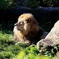 Loewe Tierpark Hellabrunn-9.jpg