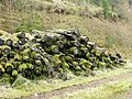 Log pile in Forest Clearing - geograph.org.uk - 750351.jpg