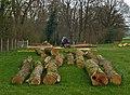 Logging - geograph.org.uk - 395570.jpg