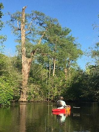 Lynches River - The Lynches River in the coastal plain near Scranton,  South Carolina.