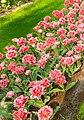 M^m Flores en el parque en la Haya - Creative Commons by gnuckx - panoramio (10).jpg