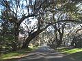Magnolia Plantation and Gardens - Charleston, South Carolina (8556465444).jpg