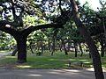 Maiko Pine Grove 3.JPG