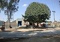 Main Chowk Chack 2-1-L Shair gadh road - panoramio.jpg