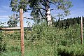 Malheur National Forest, aspen fencing (35941497160).jpg