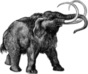 The mammoths constitute an extinct genus of megafauna.