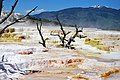 Mammoth Hot Springs Terraces - Yellowstone - panoramio (2).jpg