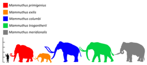 Steppe mammoth - Size (green) compared to a human and other mammoths