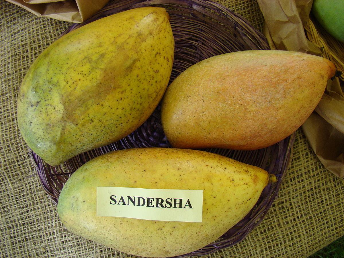 Totapuri (mango) - Wikipedia