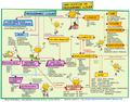 Mapa conceptual del programari lliure versió jove.png