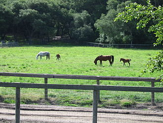 Mares and foals in a wood-fenced green field, tall hills in the background