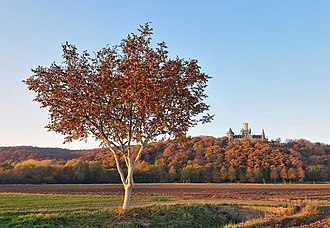 Marienburg Castle (Hanover) - Image: Marienberg and Marienburg Castle in autumn