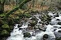 Meavy, river Plym - geograph.org.uk - 653508.jpg