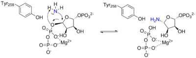 Arrow pushing mechanism for the reaction catalyzed by ATase.