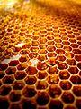Mesilaskärg.jpg