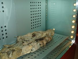 https://upload.wikimedia.org/wikipedia/commons/thumb/a/a5/Momia_guanche_museo_santa_cruz_27-07.JPG/270px-Momia_guanche_museo_santa_cruz_27-07.JPG