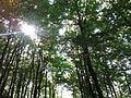 Montseny Fageda de Santa Fe 02.jpg