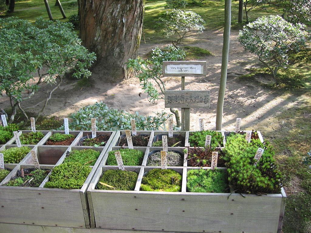 File:Moss Types At The Ginkakuji Garden, Kyoto, Japan