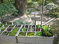 Moss types at the Ginkakuji garden, Kyoto, Japan (Paul Mannix).jpg