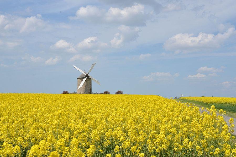 Moulin de Moidrey (Moidrey windmill) near Mont Saint Michel