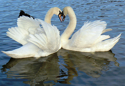 Swan (Hansa, hNs) is the symbol for Brahman-Atman in Hindu iconography. Mozzercork - Heart (by).jpg