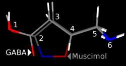 Muskimoli
