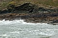 Mussels south of Pentire Point - geograph.org.uk - 1473048.jpg