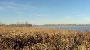 Detroit River International Wildlife Refuge - Image: N Maumee Bay