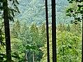 Nagoldtal - panoramio.jpg